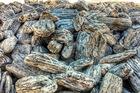 Kamień gabionowy laminowany 50-150 otoczony miro les foyers, kamień kraków, ogody kraków, kamienień ogrodowy miro les foyers